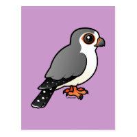 African Pygmy Falcon Postcard