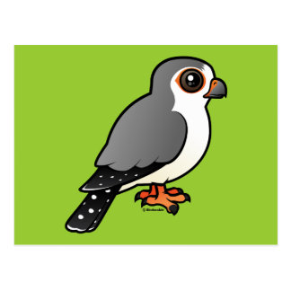African Pygmy Falcon Post Card