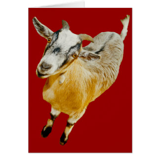 African Pygmy Goat Card