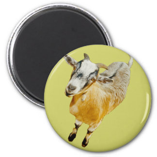 African Pygmy Goat Magnet