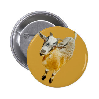 African Pygmy Goat Pinback Button