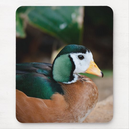 African Pygmy Goose Mouse Pad
