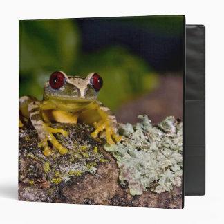African Red Eye Treefrog, Leptopelis 2 Binders