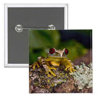 African Red Eye Treefrog, Leptopelis 2 2 Inch Square Button