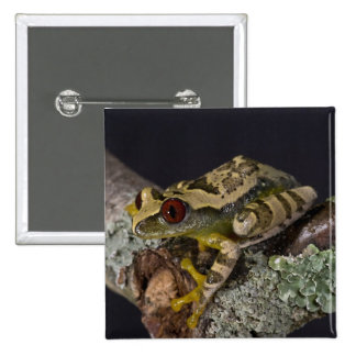 African Red Eye Treefrog, Leptopelis 2 Inch Square Button