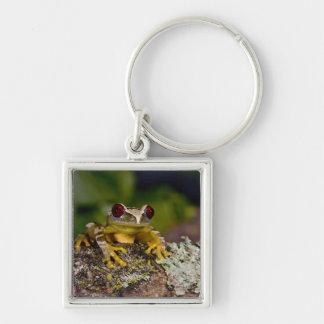 African Red Eye Treefrog Leptopelis 2 Key Chains