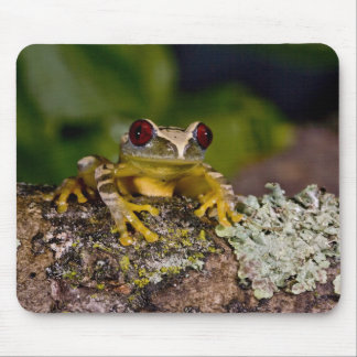 African Red Eye Treefrog, Leptopelis 2 Mouse Pad