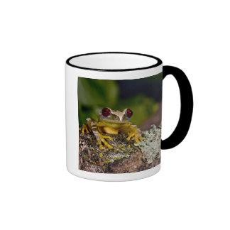 African Red Eye Treefrog, Leptopelis 2 Ringer Coffee Mug
