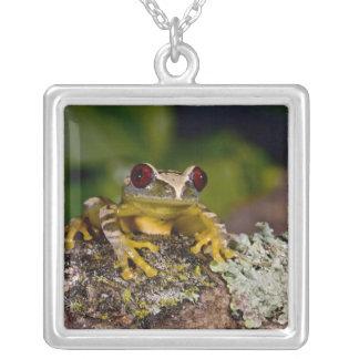 African Red Eye Treefrog Leptopelis 2 Necklaces