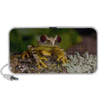 African Red Eye Treefrog Leptopelis 2 Mp3 Speakers