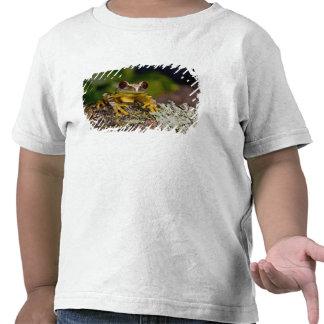 African Red Eye Treefrog Leptopelis 2 T Shirt