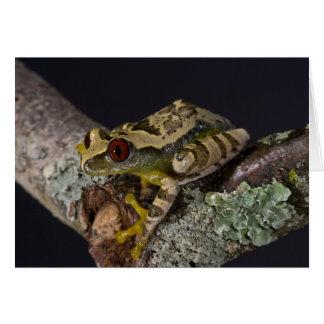 African Red Eye Treefrog Leptopelis Card