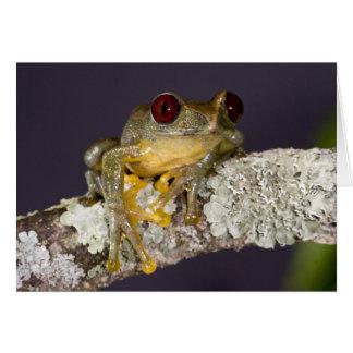 African Red Eye Treefrog Leptopelis Greeting Card