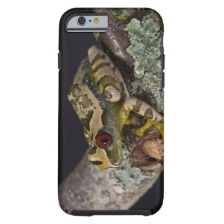 African Red Eye Treefrog Leptopelis iPhone 6 Case