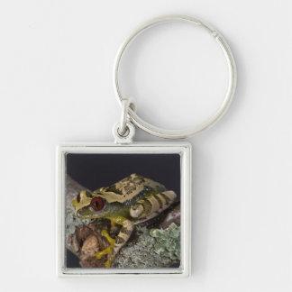 African Red Eye Treefrog Leptopelis Key Chains