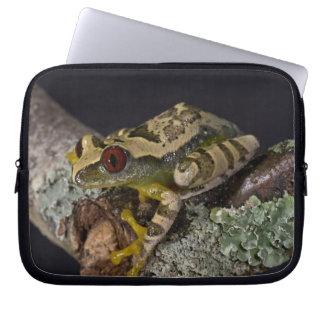 African Red Eye Treefrog Leptopelis Computer Sleeve