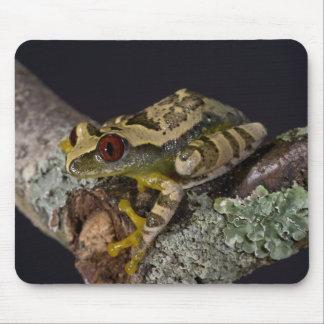 African Red Eye Treefrog, Leptopelis Mouse Pad