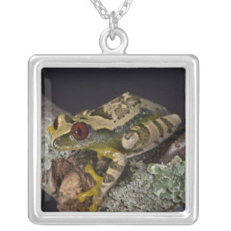 African Red Eye Treefrog Leptopelis Custom Jewelry