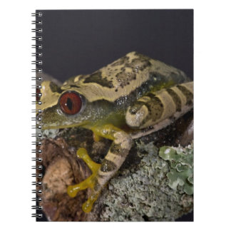 African Red Eye Treefrog Leptopelis Note Books