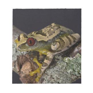 African Red Eye Treefrog Leptopelis Memo Notepad
