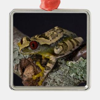 African Red Eye Treefrog Leptopelis Christmas Tree Ornaments
