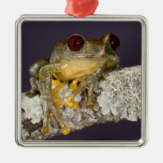 African Red Eye Treefrog Leptopelis Christmas Tree Ornament