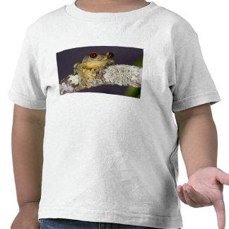 African Red Eye Treefrog Leptopelis T-shirt