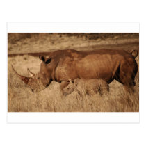 African Rhino mom and baby Postcard