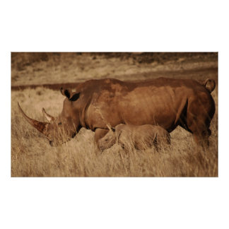 African Rhino mom and baby Poster