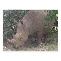 African Rhino Postcard