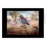 African Roller Card
