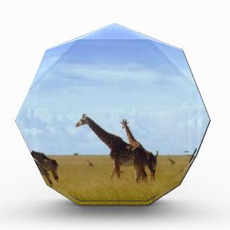 African Safari Giraffes Acrylic Award