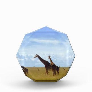 African Safari Giraffes Award
