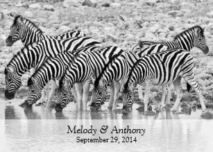 african safari zebra wedding invitation