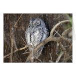 African Scops-Owl, Kruger National Park, South Cards