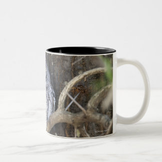 African Scops-Owl, Kruger National Park, South Two-Tone Coffee Mug