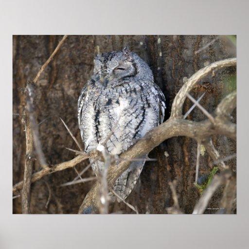 African Scops-Owl, Kruger National Park, South Print