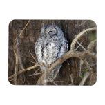 African Scops-Owl, Kruger National Park, South Magnet