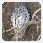 African Scops-Owl, Kruger National Park, South Square Sticker