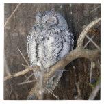 African Scops-Owl, Kruger National Park, South Ceramic Tiles