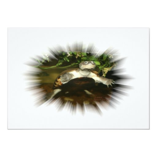African Side Necked Turtle in a burst frame 5x7 Paper Invitation Card