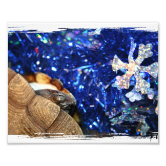 African Sideneck Turtle and Blue tinsel with star Photo Print