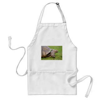 African spurred tortoise on grass adult apron
