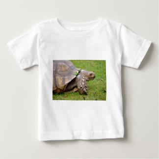 African spurred tortoise on grass baby T-Shirt