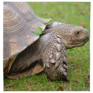 African spurred tortoise on grass cloth napkin