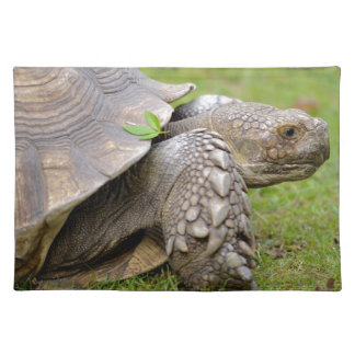 African spurred tortoise on grass cloth placemat