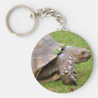 African spurred tortoise on grass keychain