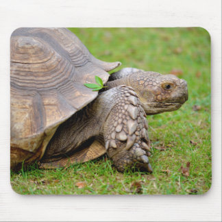 African spurred tortoise on grass mouse pad