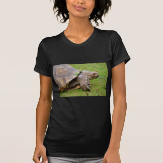 African spurred tortoise on grass T-Shirt