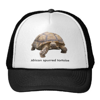 African spurred tortoise trucker hat
